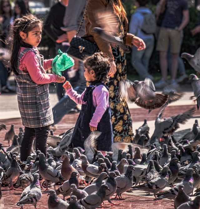 For the Birds, Plaça de Catalunya, Barcelona, Catalonia, Spain