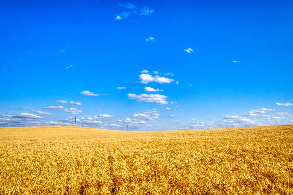 In Golden Rows, Drumheller, Alberta, Canada