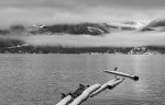 Heron & Crows Beneath the Layers, Britannia Beach, Howe Sound, Sea to Sky Highway, British Columbia, Canada