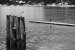 The Little Heron Lingers, Britannia Beach, Howe Sound, Sea to Sky Highway, British Columbia, Canada