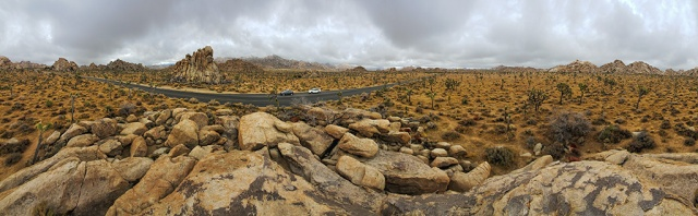 Joshua Tree Forest, Joshua Tree National Park, California, United States of America