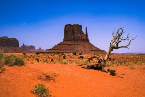 Death in the Sunshine, West Mitten Butte, Monument Valley Navajo Park, Arizona, United States of America