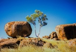 Endurance & Tenacity, Marble & Ghost Gum, Devil's Marbles, Northern Territory, Australia