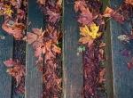 Autumn's Lingering Hues, Pacific Spirit Regional Park, Vancouver, British Columbia, Canada copy